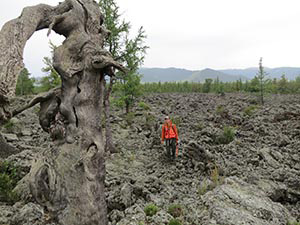 Ancient trees growing on barren rock in the Khangai mountains provided evidence that the great leader Genghis Khan took advantage of sustained warmth and rainfall. Photo: Kevin Krajick, The Earth Institute, Colombia University