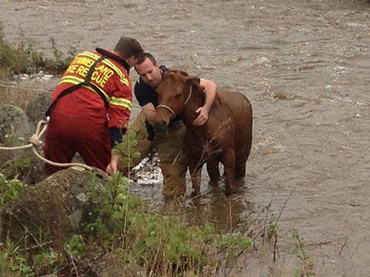 Firefighters got her standing, but only for a short time. Photo: O.A.T.S. Horse Rescue/Facebook