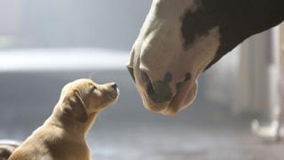 A heartwarming moment. Photo: Budweiser
