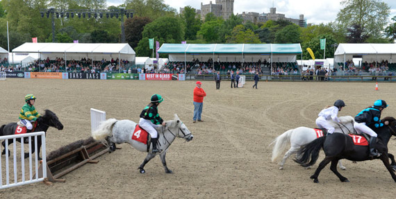 Shetland Grand National action at the Royal Windsor Horse Show.