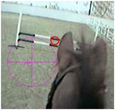 A frame taken from the mobile eye recording device, showing the point-of-gaze cursor (the red circle) and the pupil indicator (the purple circle) on the jump approach.