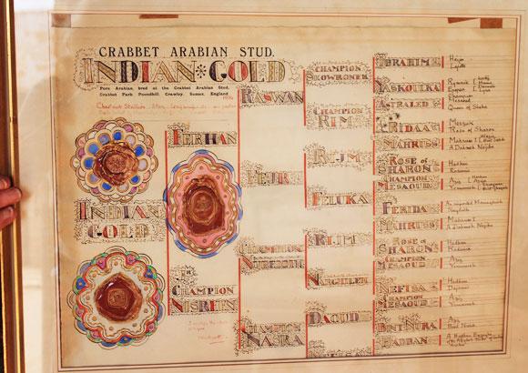 Lady Wentworth's illuminated Indian Gold pedigree, at Gadebrook Stud.