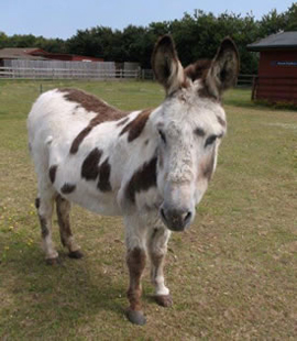 Pepper has a bunch of new donkey pals at Redwings. Photo: Redwings