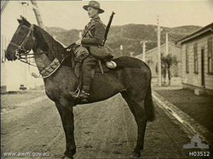New Zealand war horse Bess.