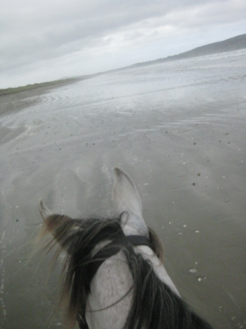 Getting out of the arena and into the open spaces can do wonders for a horses's attitude.
