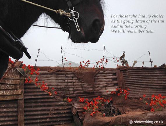 war-horse-poppies