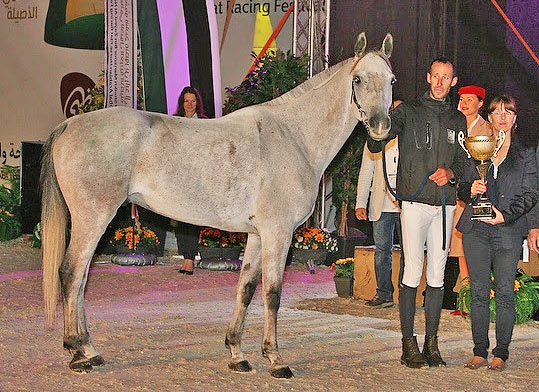The stallion Tahar du Barthas ridden by Vincent Gaudriot (FRA) won the Best Condition Prize at the FEI World Endurance Champioships for Young Horses.