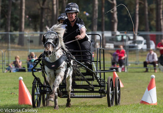 New Zealand's Cherie Stalker on her way to individual gold in the Very Small Pony division at the British Scurry and Trials Driving World Championships.