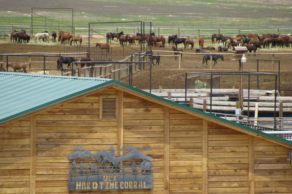 More than 1100 wild horses are being removed from the