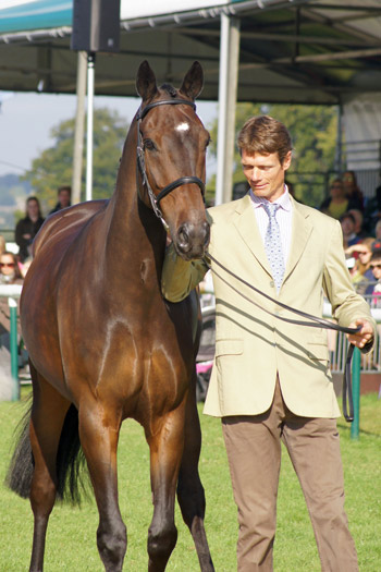 FEI Classics winner William Fox-Pitt, with Bay My Hero, who was fourth at Burghley.