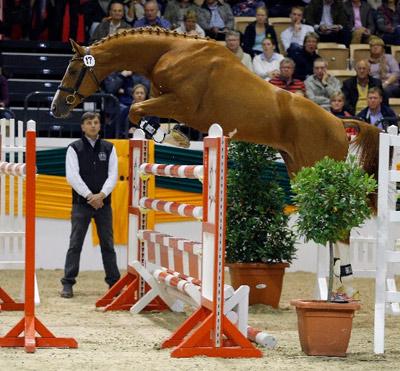 Davidas (Horalas) in the free jumping test.