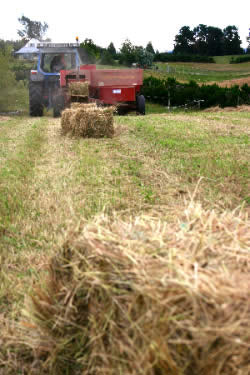 Hay is a key option during dry conditions, but its price will rise quickly as the drought bites.