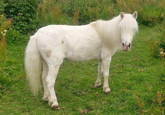 Sam was stolen from his Leicestershire stable overnight on January 28. Photo: Sam's Been Stolen page/Facebook