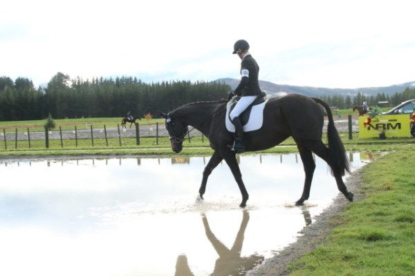 The dressage arenas at Taupo are being moved regularly to give horses a chance.  © Jane Thompson