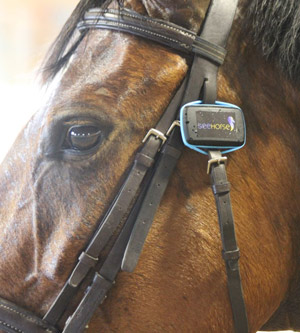 SeeHorse fitted to a horse's bridle.