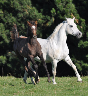 Aurora Stud's Silver Crescent with her daughter Aurora Clouded Moon.