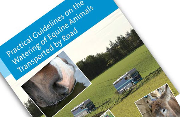 The new watering guidelines for horses are the result of a collaborative effort. Photos: World Horse Welfare