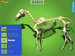 """Equine Guelph's healthcare tool """"Journey through the Joints""""."""