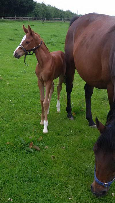 The filly foal by clone stallion Cruising Arish was born at Hartwell Stud in June.