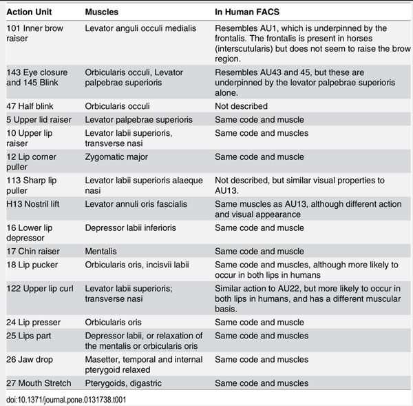 A summary of the Action Units in EquiFACS compared to Human FACS. Photo: PLOS ONE/ doi:10.1371/journal.pone.0131738.t001