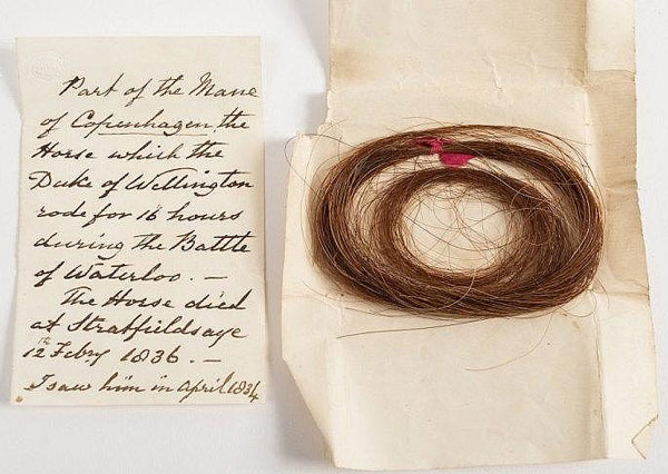 The mane hair from Copenhagen, together with the accompanying note, is expected to fetch up to £5000 at auction. Photo: Bearnes Hampton and Littlewood