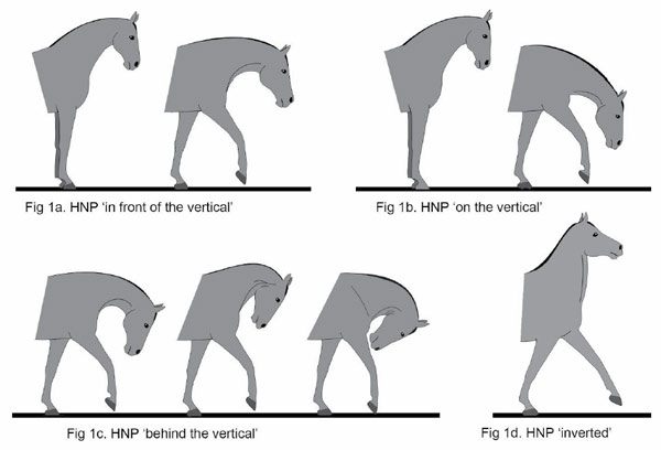 Overview Of The Central Nervous System Gross Anatomy Of The Brain Part 2 likewise Hyperflexion Thumbs Down Equitation Scientists additionally Belly Breathing also Fulltext further Posterior View. on dorsal body positions