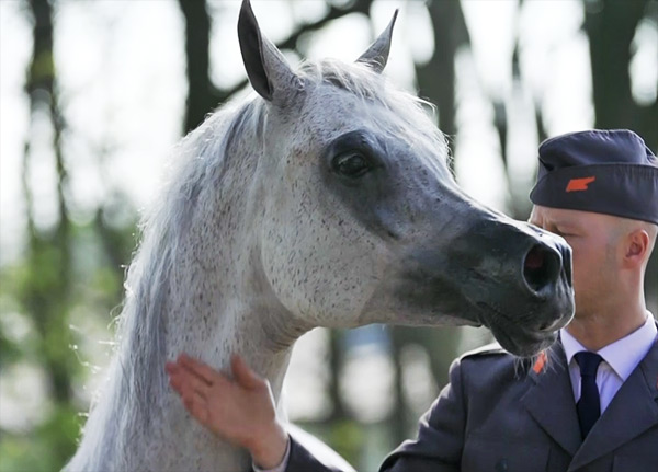 Ten-year-old mare Pepita fetched €1.4 million at last weekend's Pride of Poland sale.