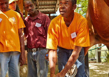 In February 2015, FEI Tutor Susanne Macken travelled to Haiti to deliver the first Pilot Course for Grooms supported by FEI Solidarity which was met with great enthusiasm and interest.