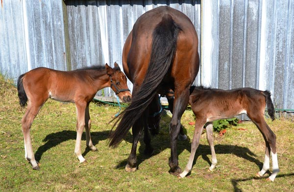 Pictured at 18 days old, Fudge, left, and Poppet have a bright future ahead of them, thanks to the care of their human family.