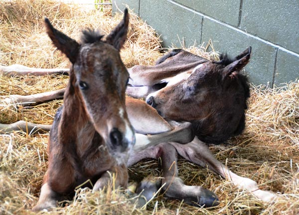 24 hours old: Fudge and Poppet rest peacefully. Tough times were still to come.