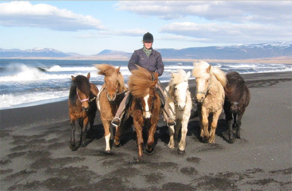 The use of native breeds in equine tourism in the Nordic region has been explored in a new guide for tourism operators.
