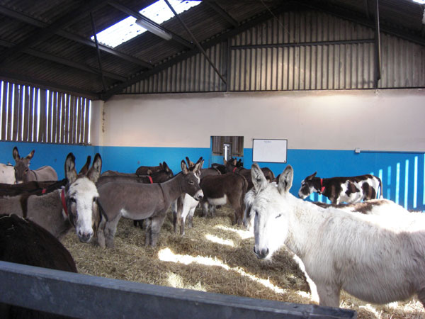 The Donkey Sanctuary's residents produce 5200 tonnes of straw and manure waste annually. Photo: The Donkey Sanctuary
