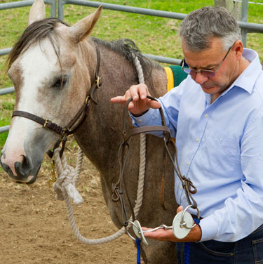 I haven't a clue why you'd ever use any more than a plain loose-ring snaffle bit for any horse to do anything.
