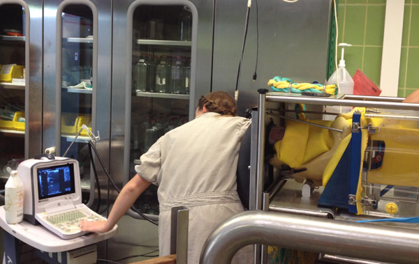 Ultrasonography can also also be undertaken on the equine simulator.