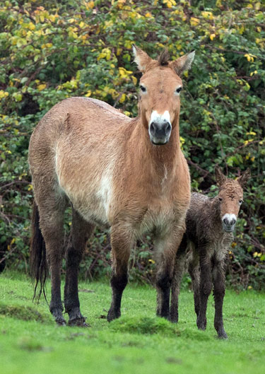 A name is sought for the new Przewalski's horse foal at Port Lympne Reserve, with five to choose from.