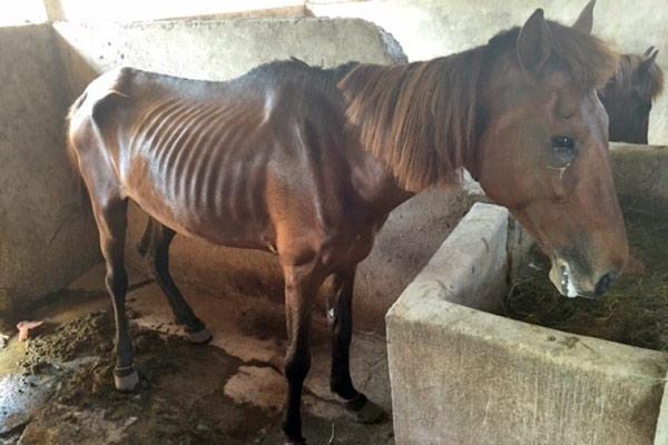 A Gili Island pony.