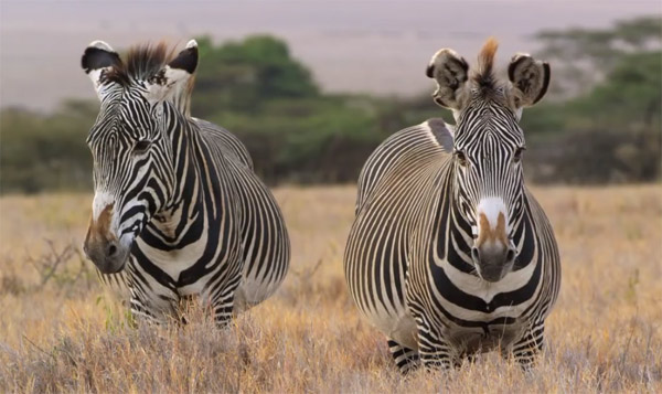 Registrations for the Great Grevy's Rally are now open.