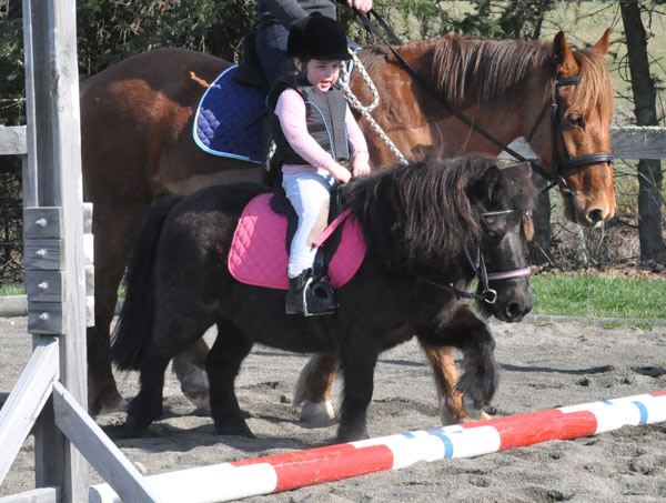 Those first steps with horses: A beginner's guide ...