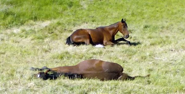 sleeping-resting