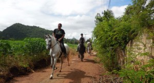 horse riding tours in Thailand by Horse Trail Thailand