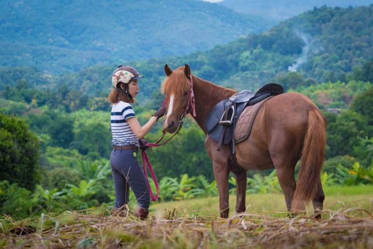 Native Thai Horse.jpg