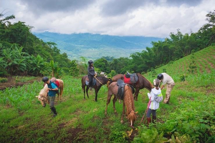 Horse-Riding-Thailand-Tour