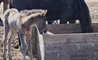 willow farms baby small
