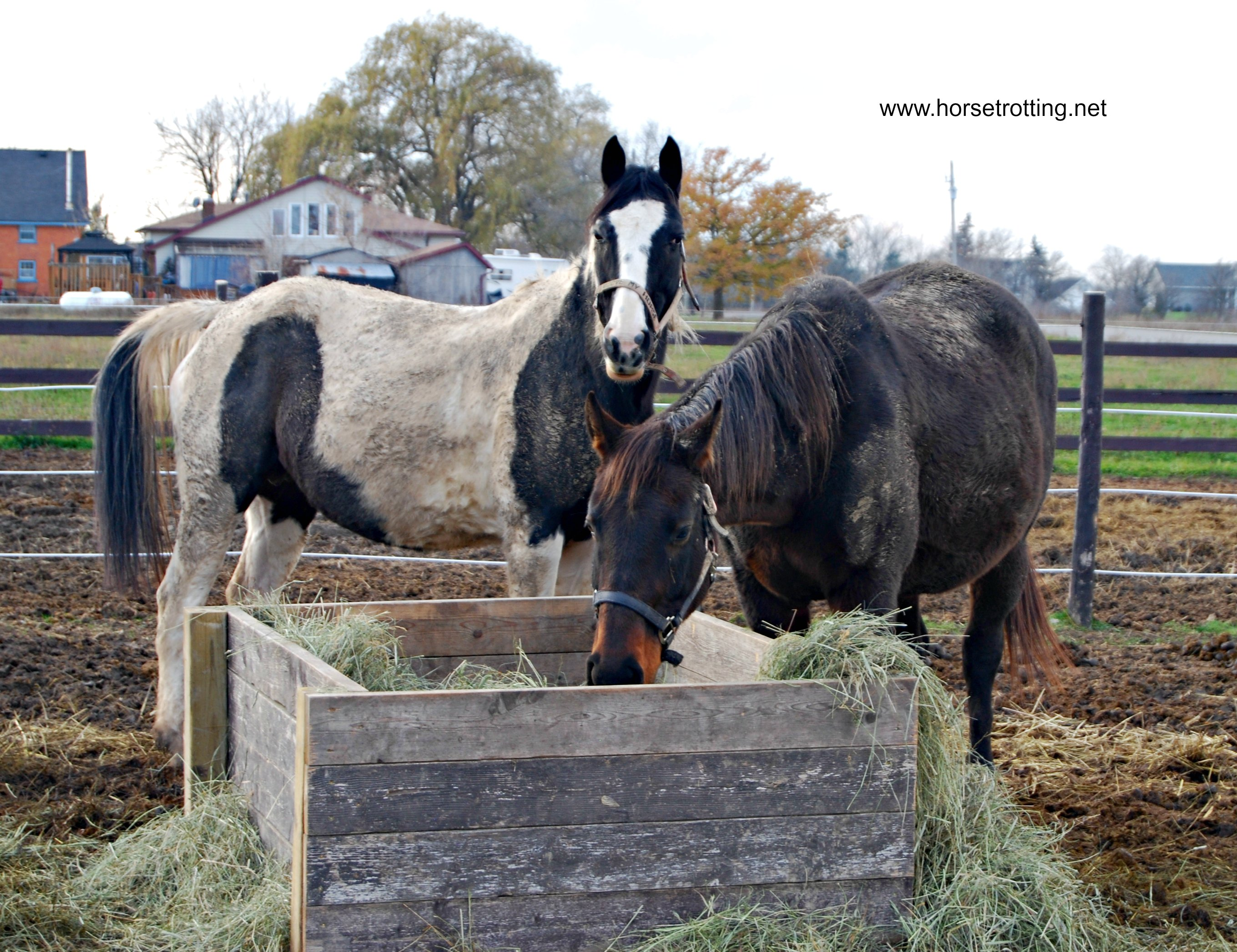 Hagersville, ON: Christmas Open House with Rescue Horses