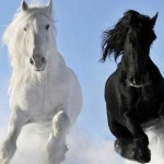 The 10 Most Beautiful Horse Breeds In The World Horsetv Live