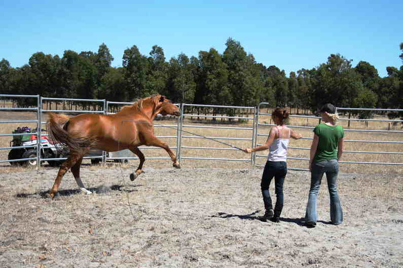 Two girls working with a horse at Horse Vision