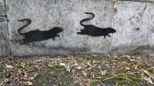 Sainsbury's Rat Graffiti