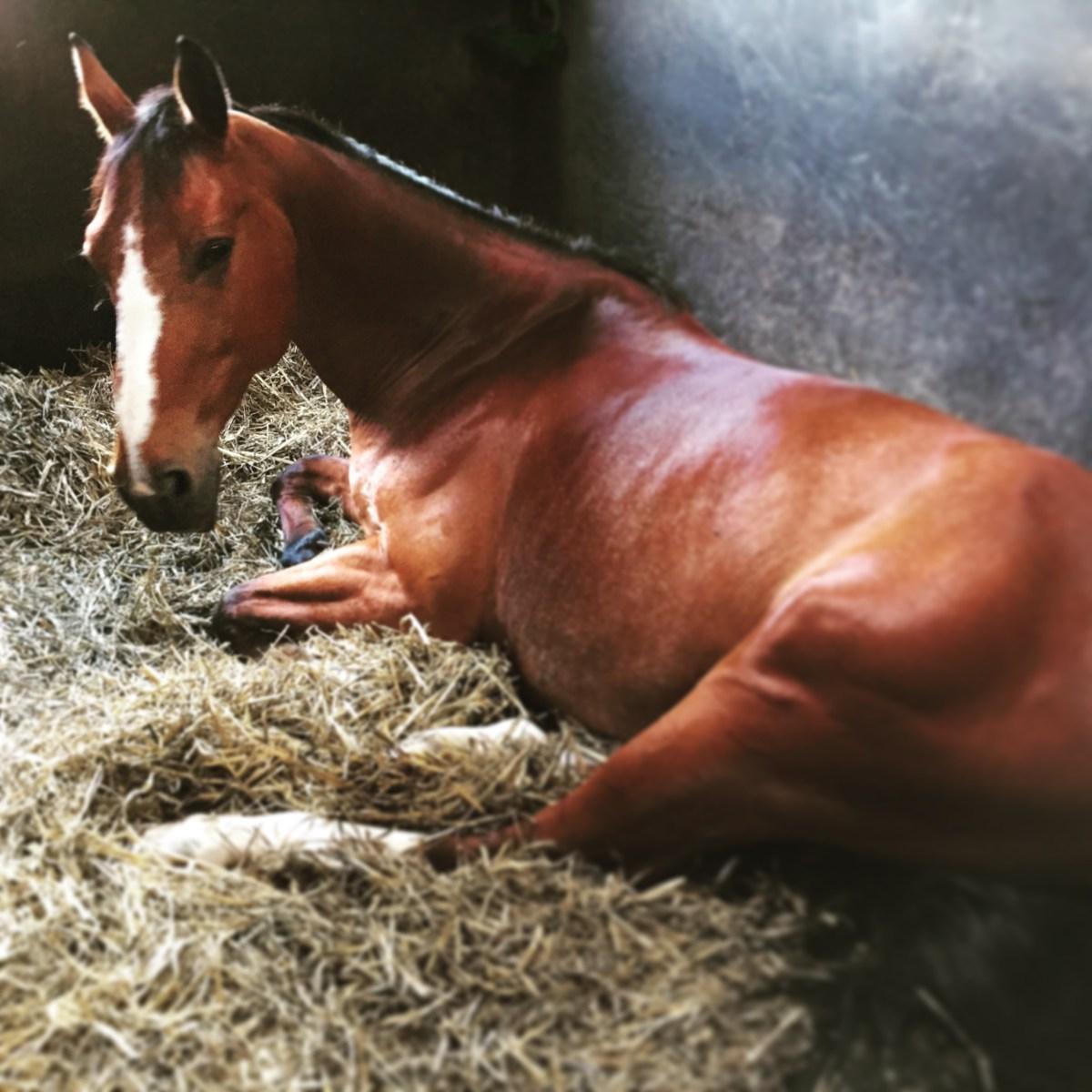 L'hygiène du boxe de notre cheval