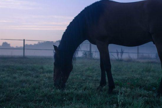 A la lumière de l'aube dans la brume.