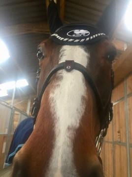 in horse we trust muserolles